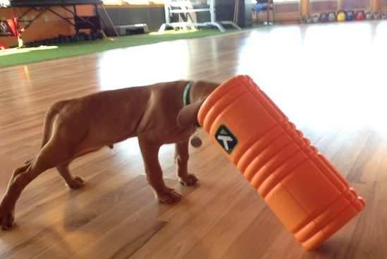 Murphy and the foam roller