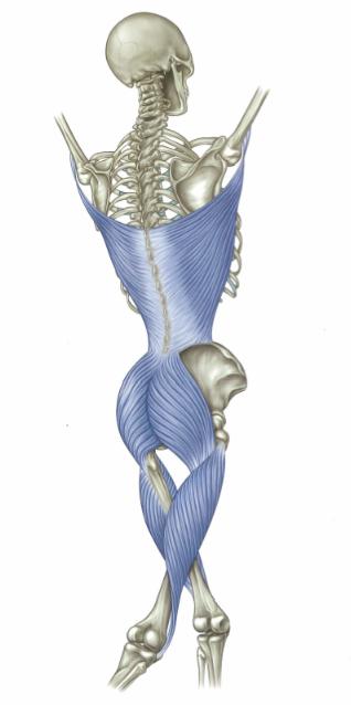 posterior chain diagram