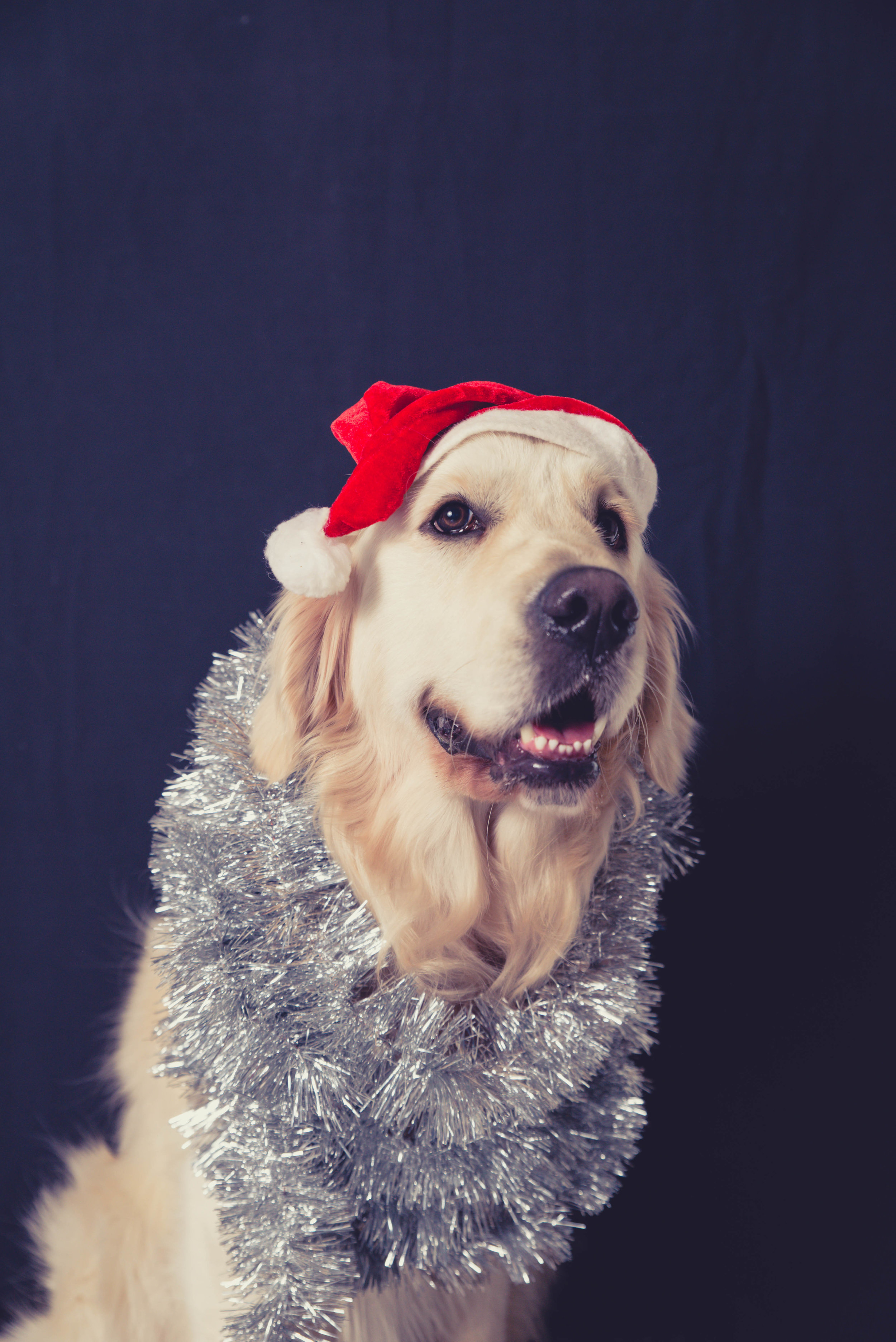 8 Christmas gift ideas for dog lovers and dogs 2018 — Yellow Lab Pet ...