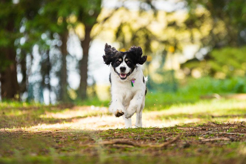 auckland dog photography