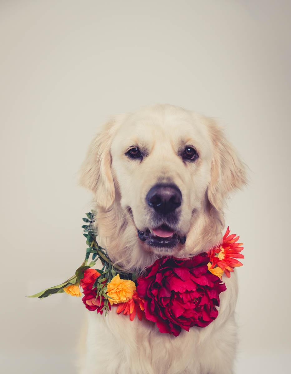 flower dog photographer
