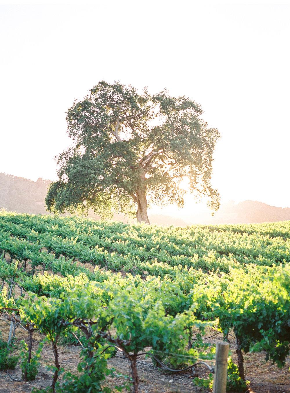 Southern-California-Wedding-Natalie-Schutt-Photography_06.jpg