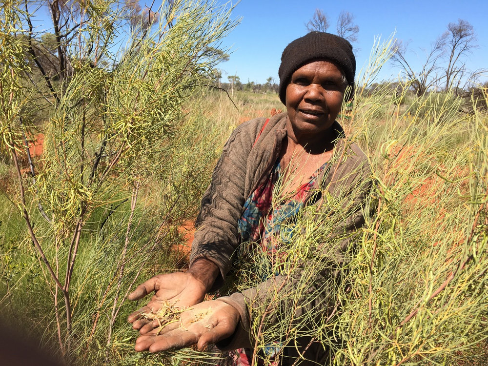 Artist Colleen Ngwarraye Morton showing some traditional bush medicine. Image courtesy  Lara Damiani .