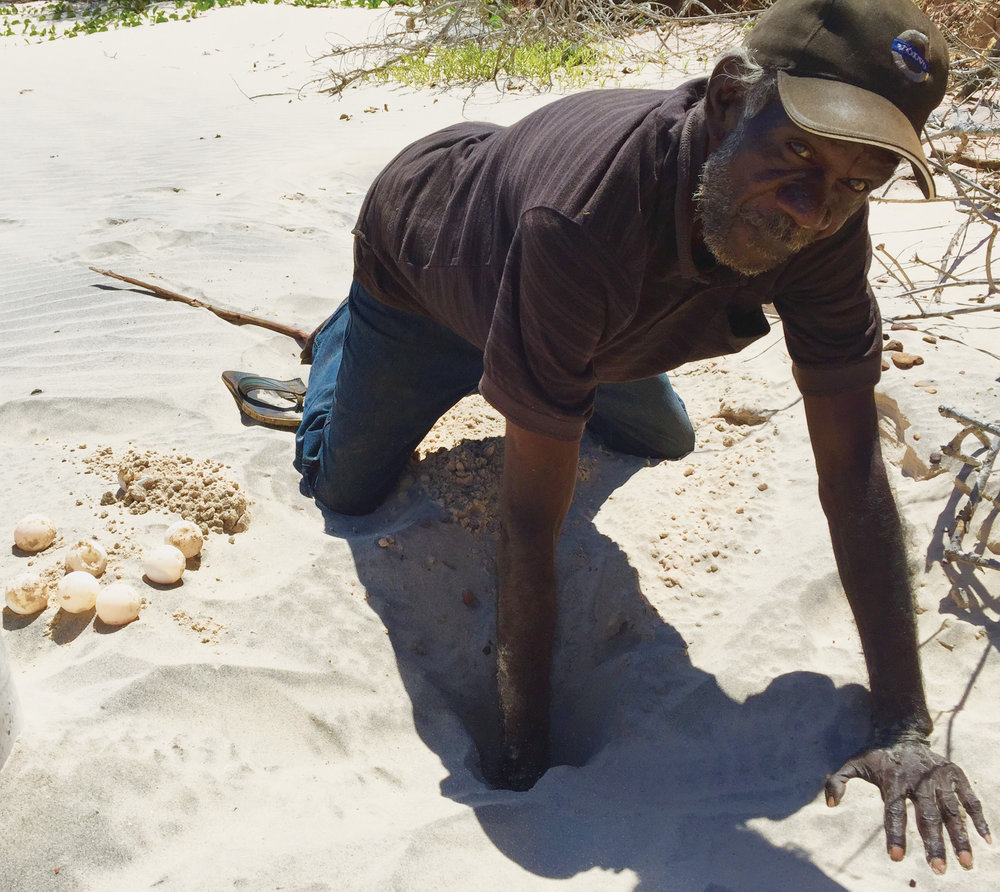 Tiwi artist Jock Puautjimi hunting for turtle eggs, Bathurst Island, Northern Territory. Photo courtesy  Tiwi Design .