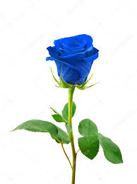 UNDER THE BLUE ROSE