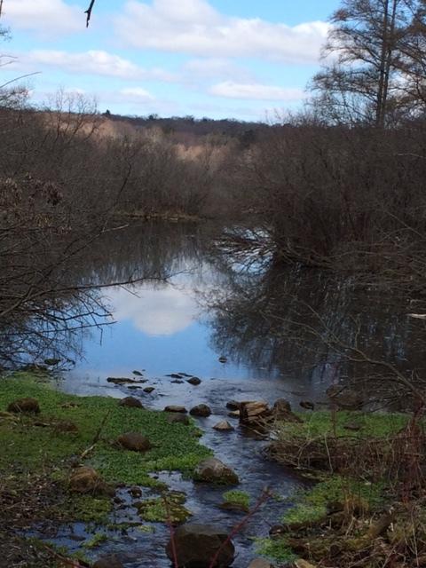 UW-Madison Arboretum1.JPG