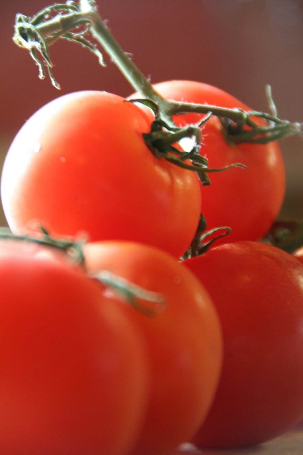 Tomato - Tomato is your sister.more round than legal. She drinks Coca-Colafor breakfast and pats down itinerant items on her kitchen counter,thoughtful as Braille.Her indelible fingersslice tomatoesin eighths, the precise mouthfulfor two fingers,leaving behindonly a few of thesleeved seeds.