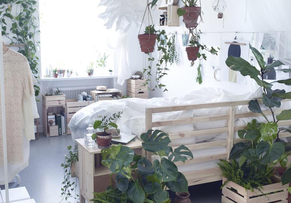 ikea-plants-in-the-bedroom-__1364309659943-s41.jpg