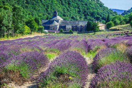 Lavendelmark Frankrig