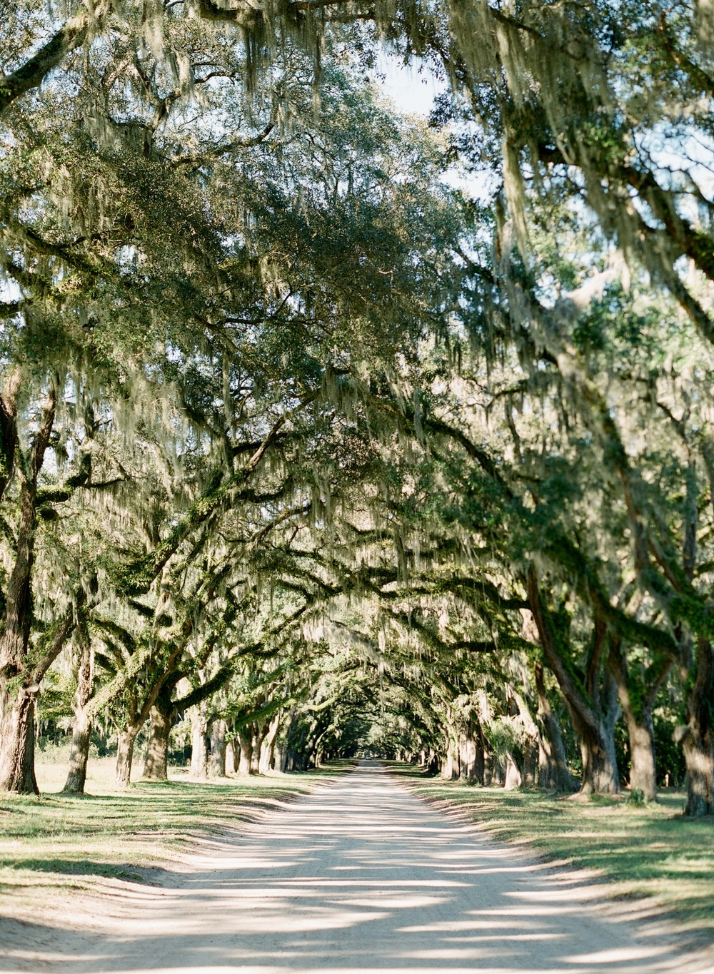 Wormsloe Savannah Georgia Engagement by The Happy Bloom Fine Art Photography_0036.jpg