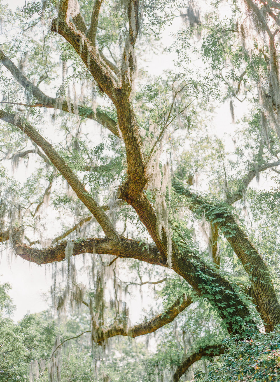 Charleston-Wedding-Legare-Waring-House-36.jpg