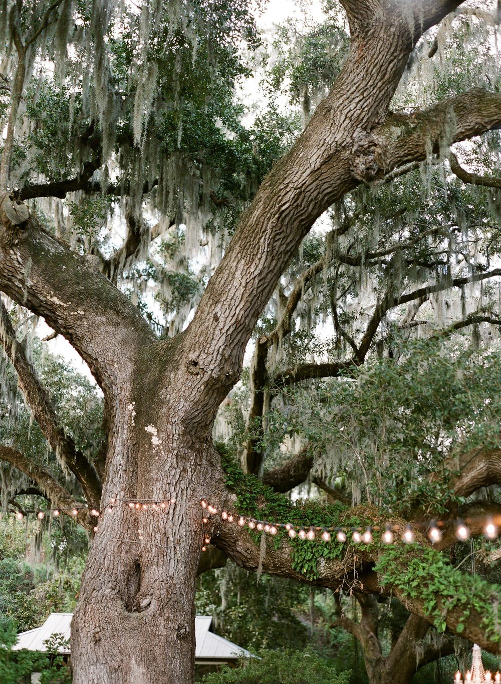 Charleston-Wedding-Wingate-Plantation-49.jpg