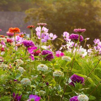 awaken.your_.garden.for_.spring-350x350.jpg