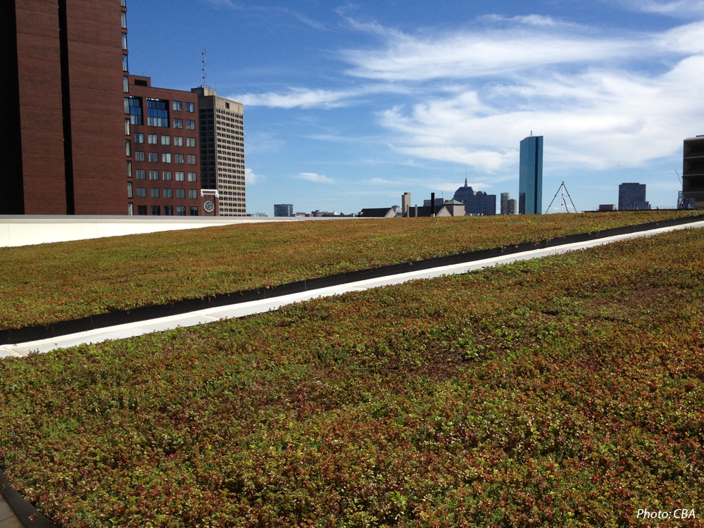 5 Cambridge Center Green Roof- Cambridge, MA