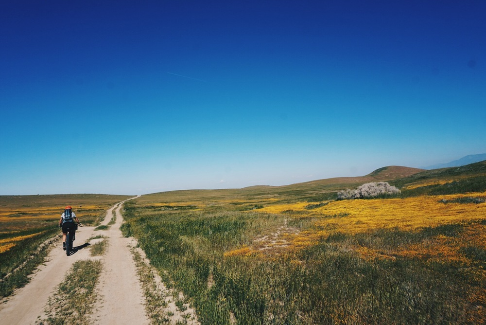 Flowers At Carrizo Plain.jpg