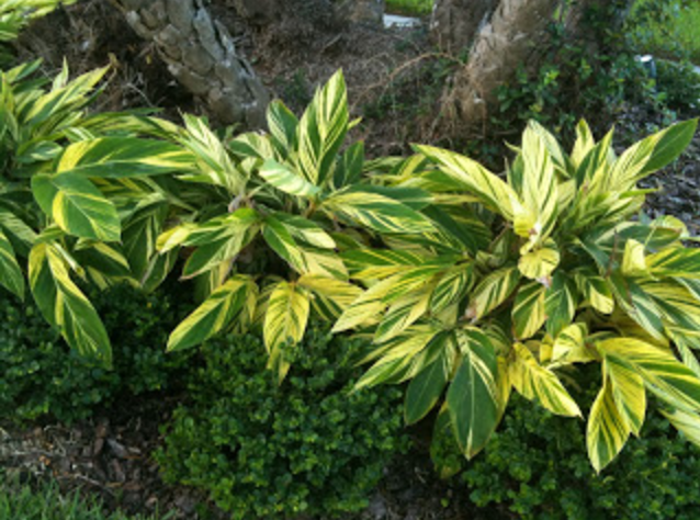 Spacing Landscape Plants In Florida Victoria S Bloomers