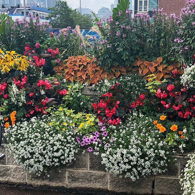 This is Navy Pier in Chicago. Beautiful planters!