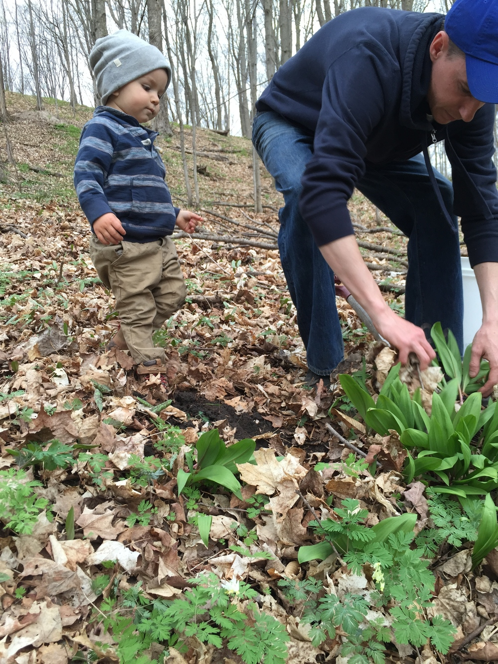 Chef Xel and little Kipp, foraging wild leeks on Pia's property- leeks waiting to be transformed into soups and other dishes in Spring.