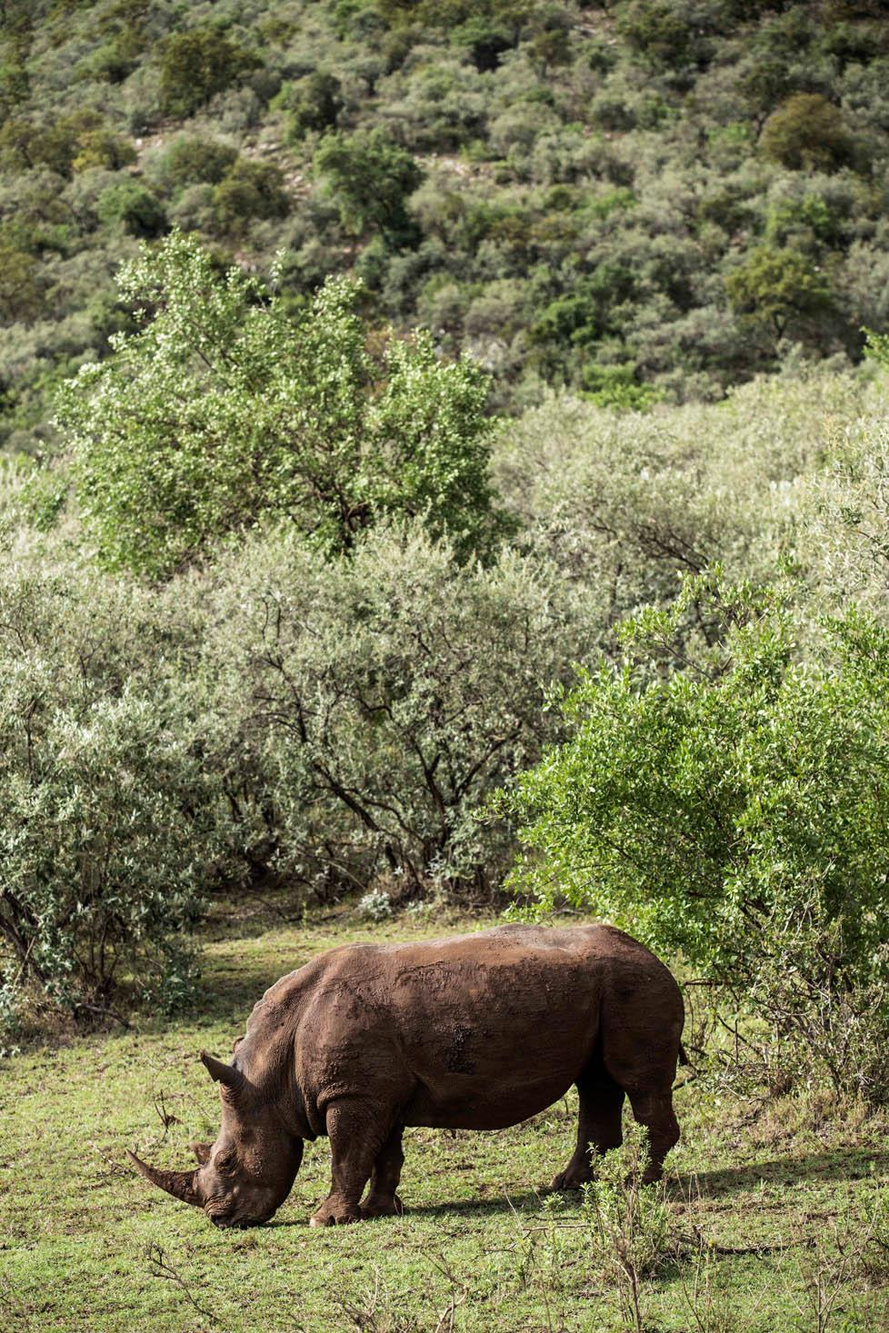 FMM Safari Rhino 17.jpg