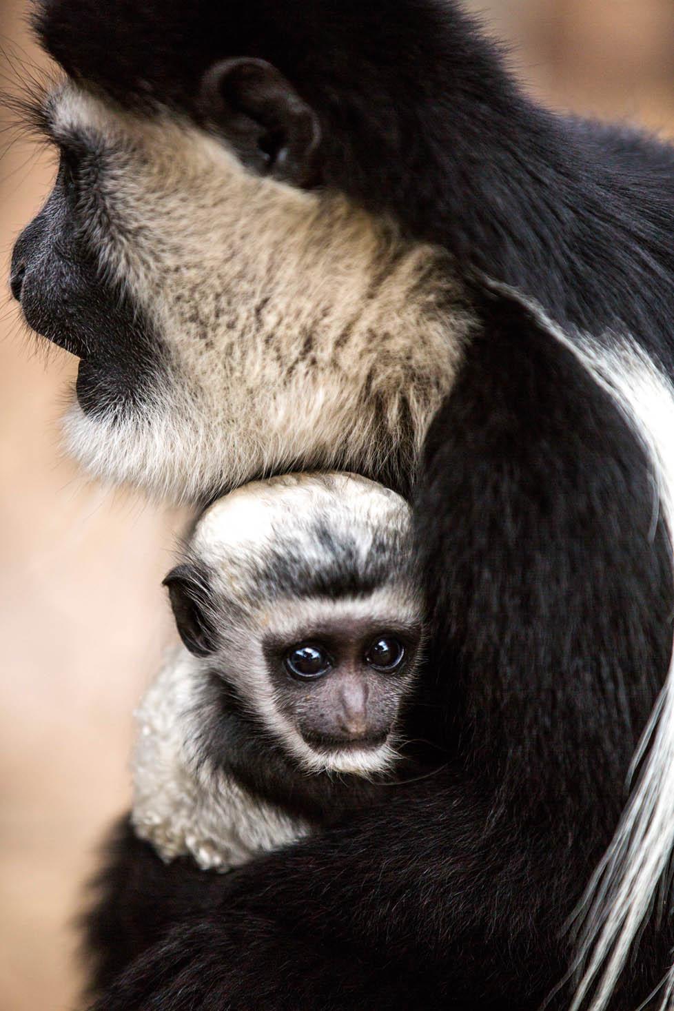 FMK Animal Orphanage 059.jpg