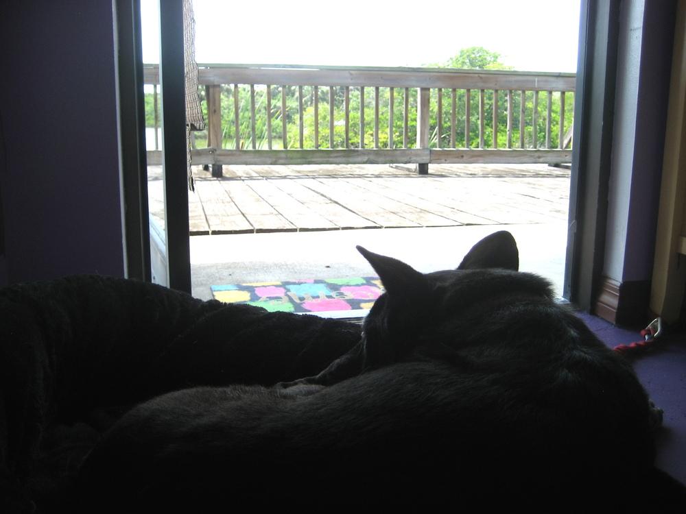Proton enjoys the view as well.