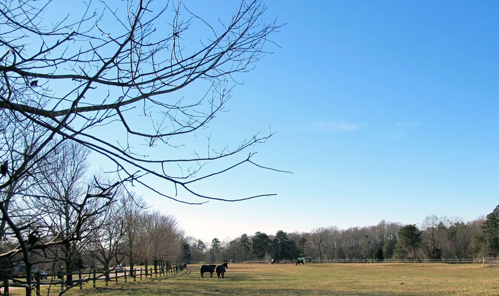 North Carolina, along with the rest of the country, is cold this week! We drive by   beautiful   rescue horses   every day covered in blankets. Driving by this peaceful scene in the middle of our day adds much joy!
