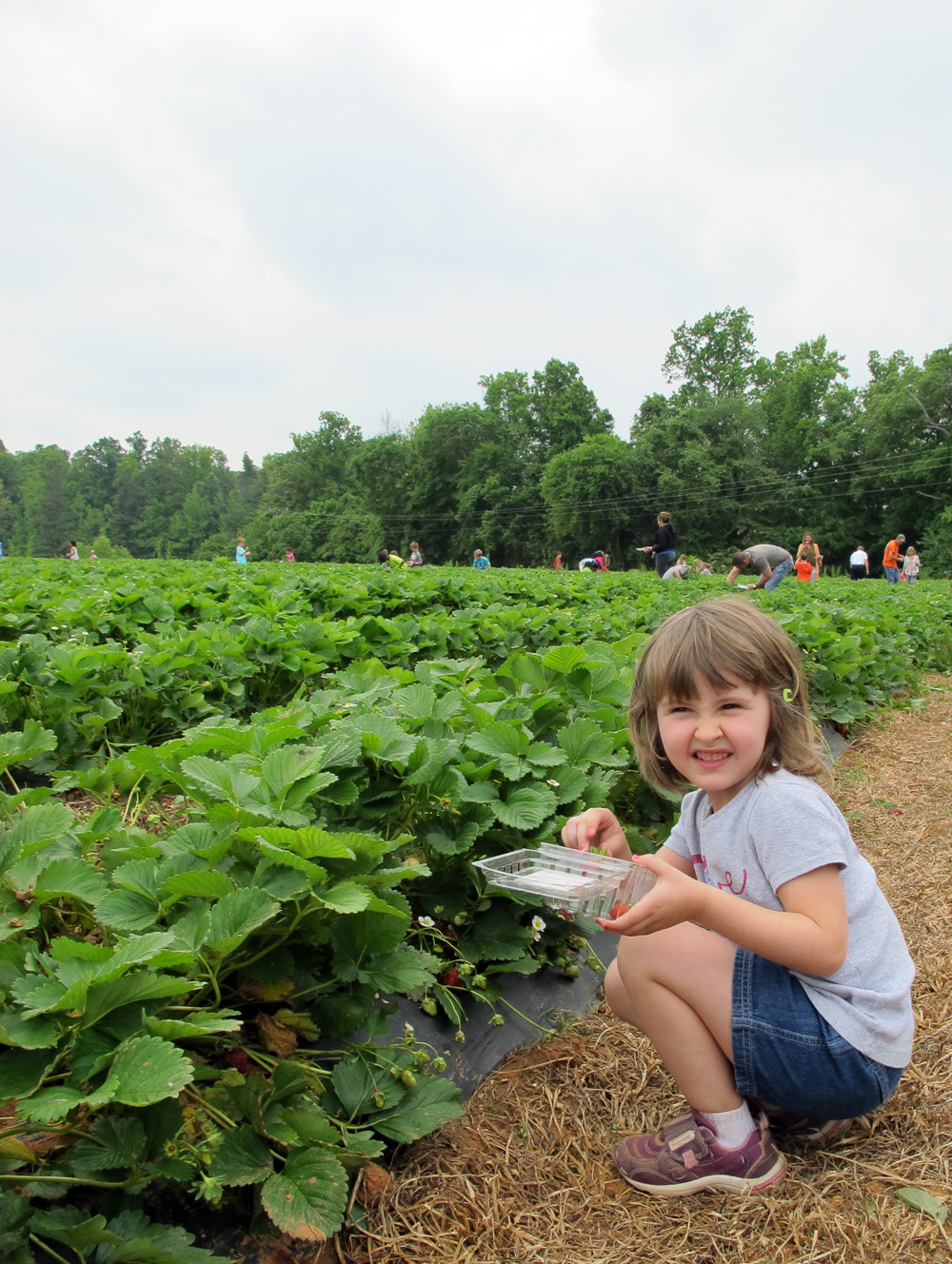 a trip to the strawberry patch!
