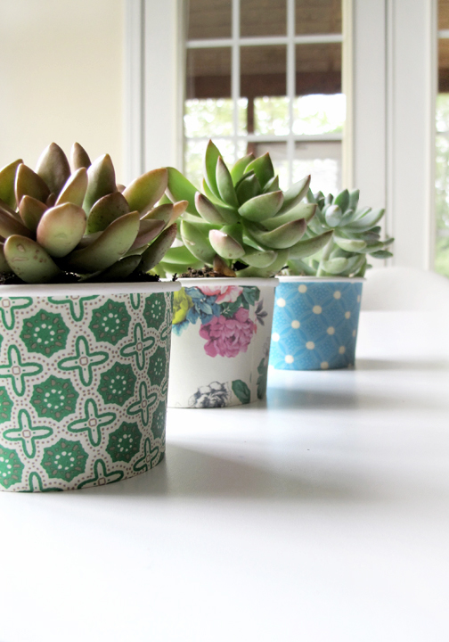 super easy dessert cup succulents, perfect party decor!