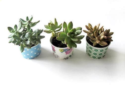 paper cup dessert succulents
