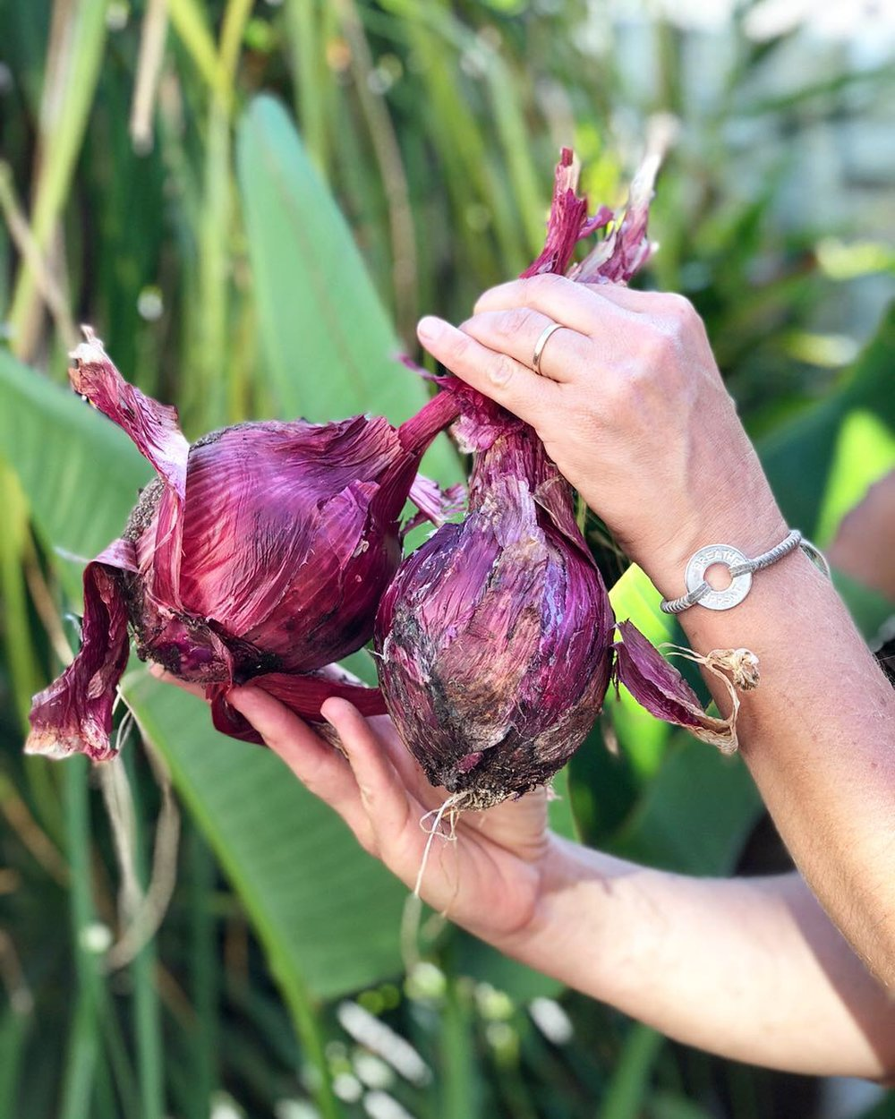 Red onions from our recent harvest. We pulled, cut and picked our dinner fresh out of the soil and the trees