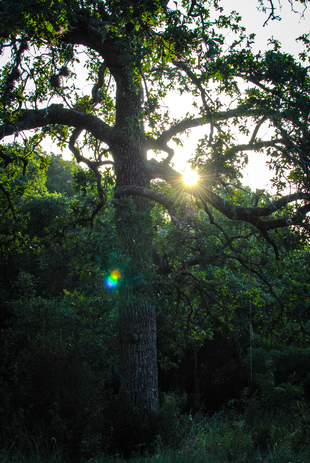 The sun peeks through a cluster of trees at Krause Springs campgrounds.