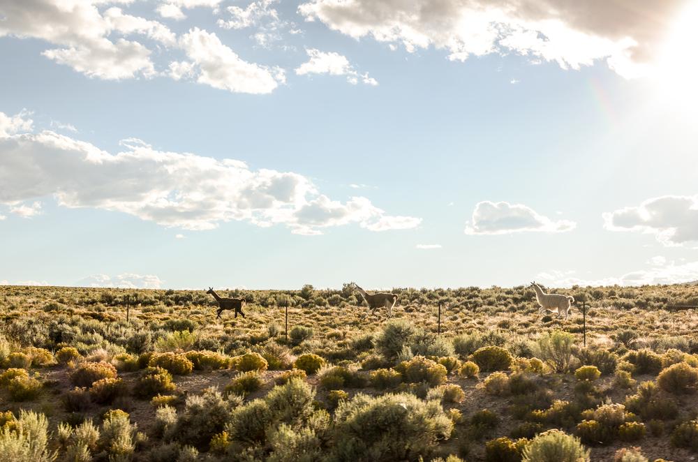 Taos (208 of 211).jpg