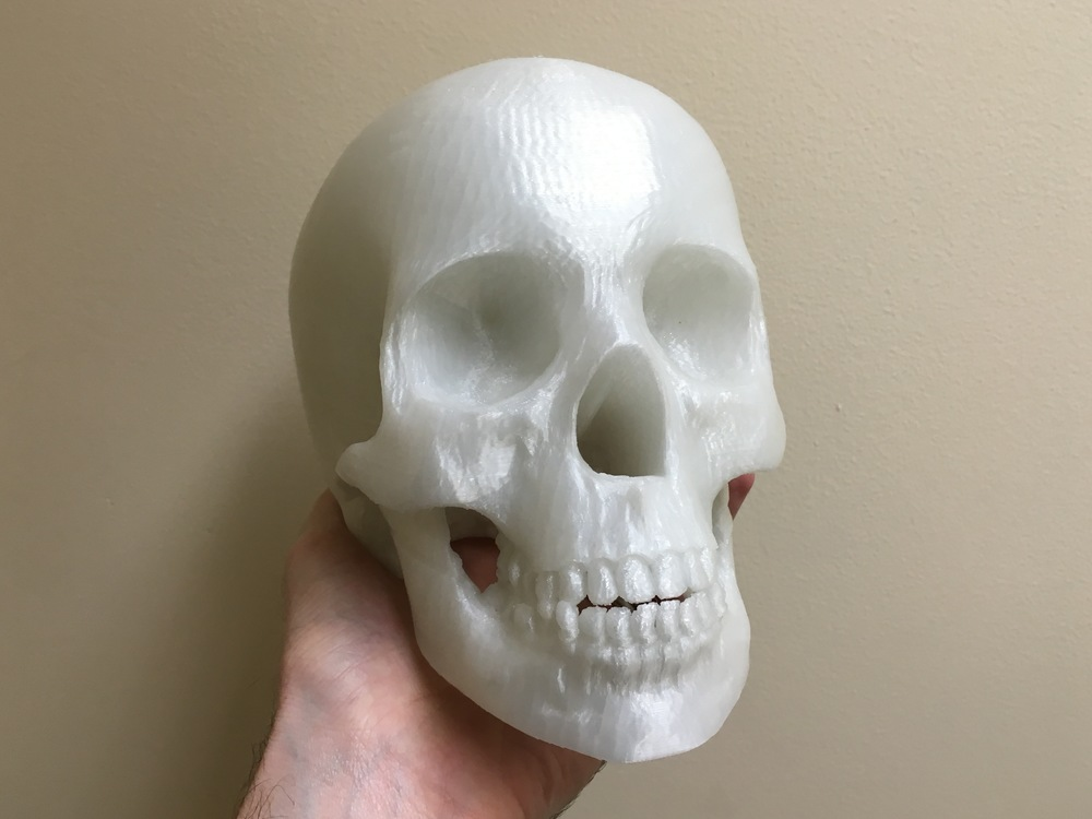 Life size 3D print of a human skull