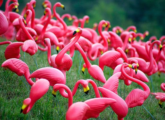Featherstone-flamingos.jpg
