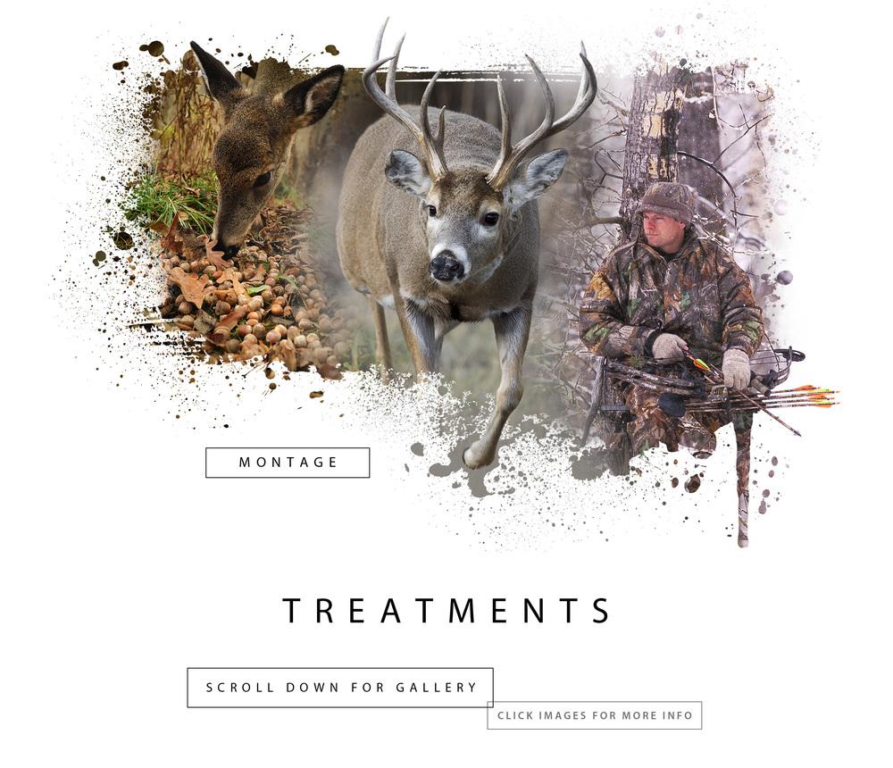 SECTION HEAD- TREATMENTS3.jpg