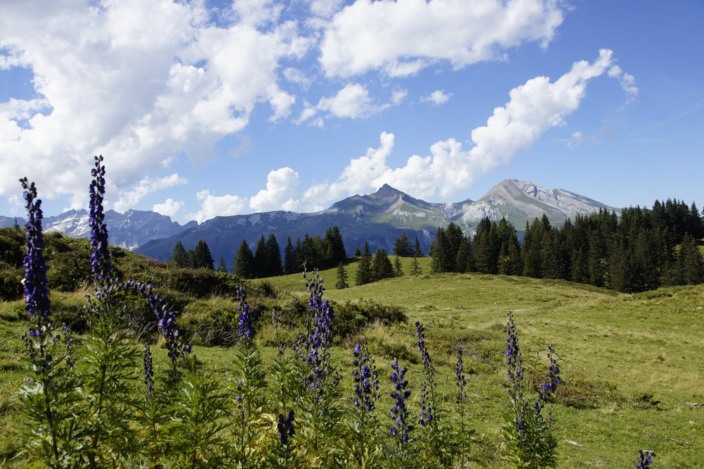 Swiss-meadows_freshly-pressed.JPG