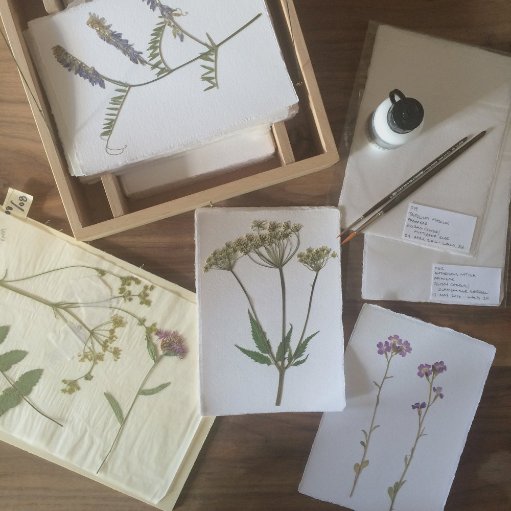 herbarium-how-to_pressed-images
