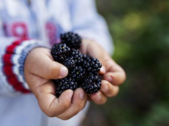 Photo:  www.woodlandtrust.org.uk