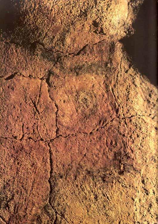 Detalle de la cabeza de un bisonte hembra, con grabados notables en torno al ojo.. Altamira.
