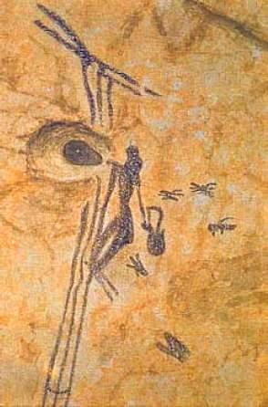 Recogida de la Miel. Cueva de la Araña