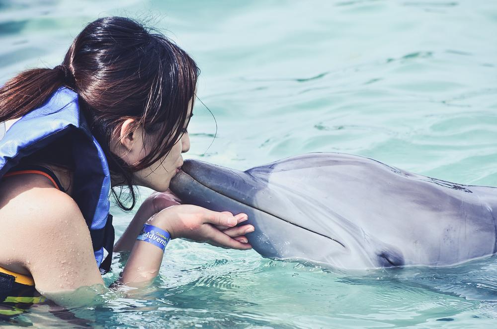 caribbean-cruise-dolphins.jpg