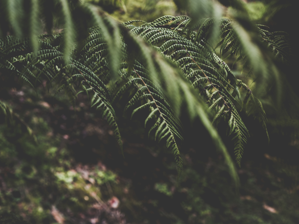 mount-lofty-botanic-garden-fill-me-in-2.jpg