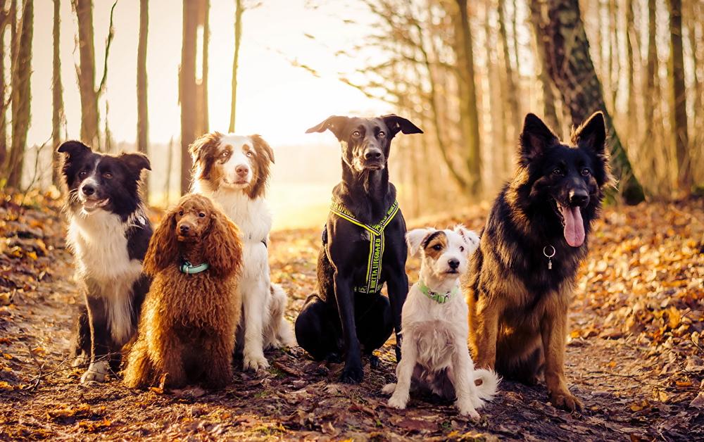 - Teilnehmen können grundsätzlich hunde- und menschenverträgliche Hunde. Auch Hunde mit Verhaltensauffälligkeiten sind mir willkommen.Bei Unsicherheiten bitte einfach vorher anfragen!Gerne helfe ich Ihnen auch mit einer