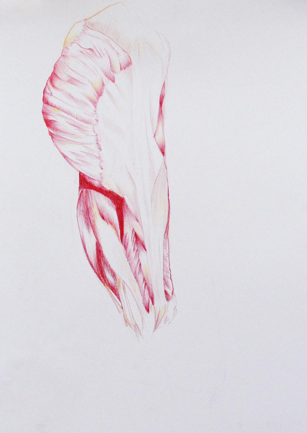 Menschliche Anatomie für Künstler — Galerie ZWEI