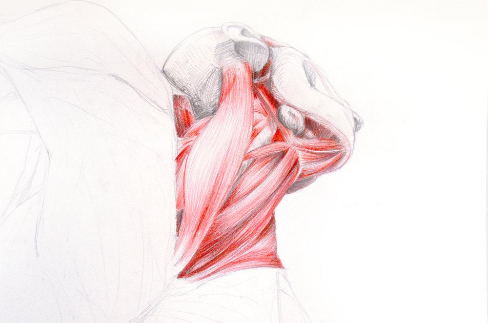 Menschliche Anatomie für Künstler II — Galerie ZWEI