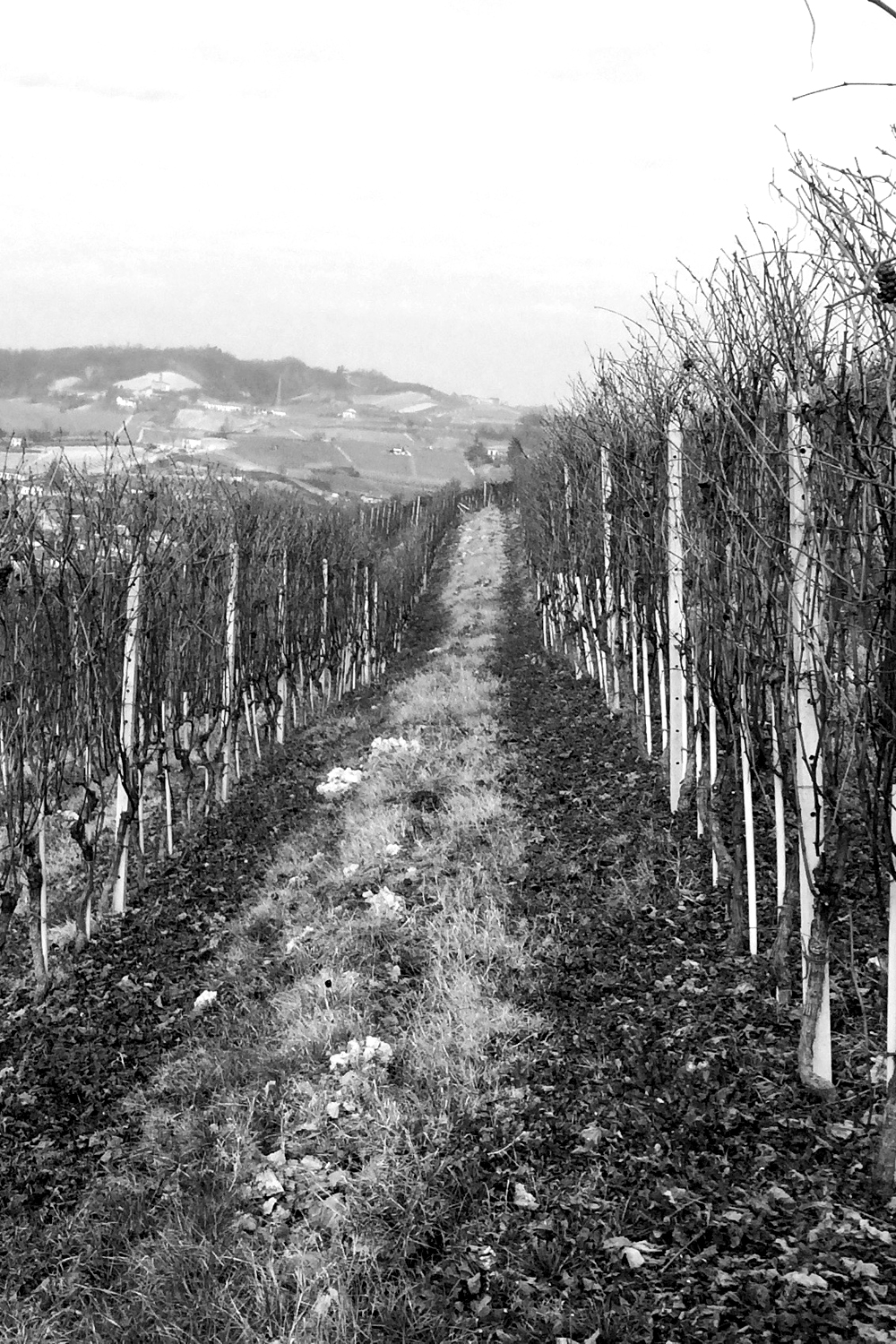 NEBBIOLO: 40% - DOC Nebbiolo D'Alba • Deep Chalk, clay & sand mix • Slight Slope • South-East facing • Green • Pruning Style: Guyot • 30 years old • 7000 kg/ha