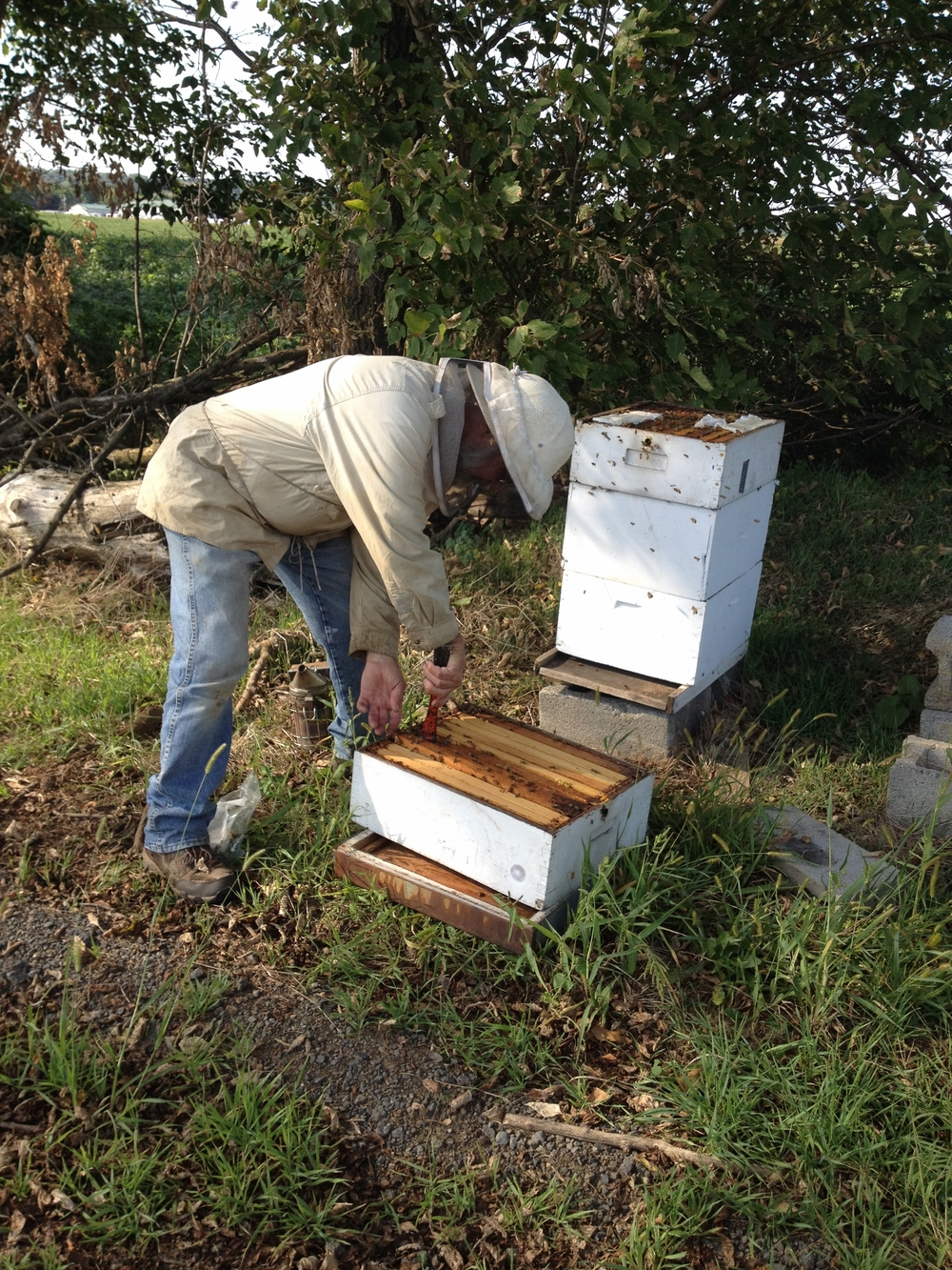 Mr. Clause checking the hive.