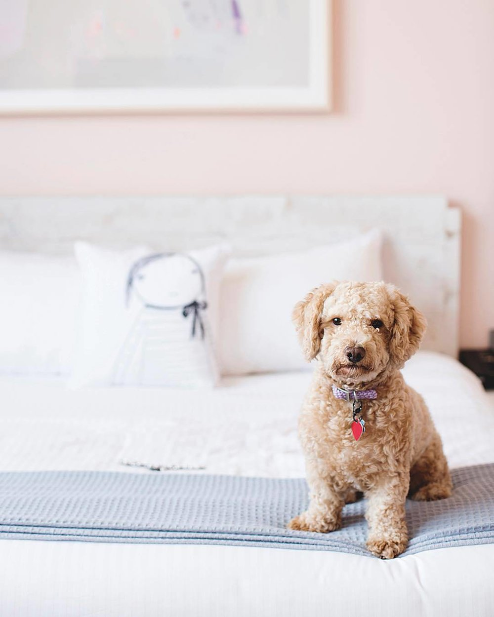 Quirk Hotel has a pet-friendly policy.  Photo by @mollyscottphoto.
