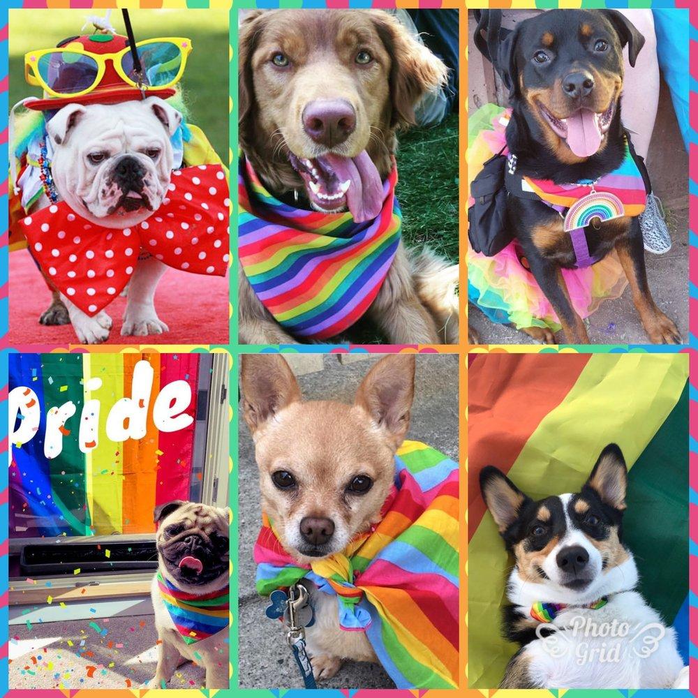 Pridepets.jpg