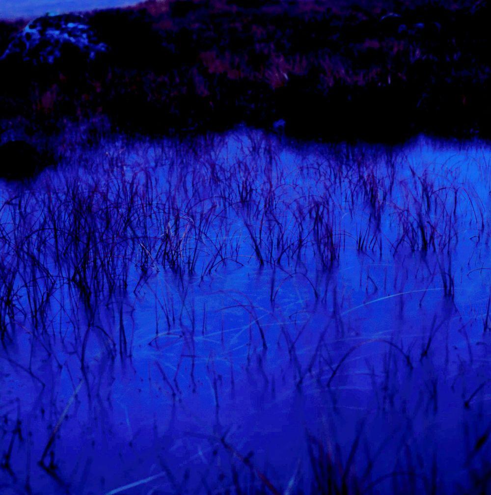 grasses in lake.jpg